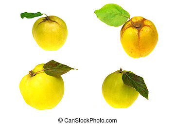 Quince on a white background