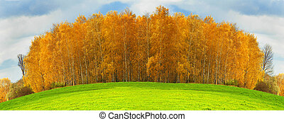 Birches on on a background of a grass...