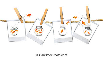 Humous Image of Goldfish Jumping Around - Old FIlm Frames...