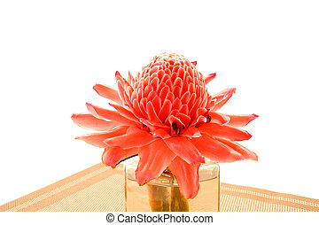 Tropical flower of red torch ginger