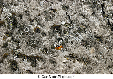 Mould on stone artwork - Natural decayed stone surface with...