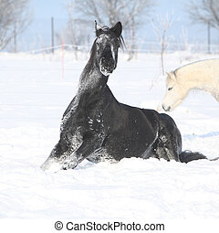 Nice horse rolling in the snow with pleasure