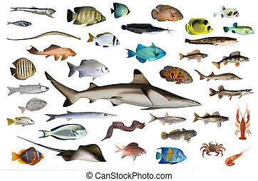 fish - big collection of fish