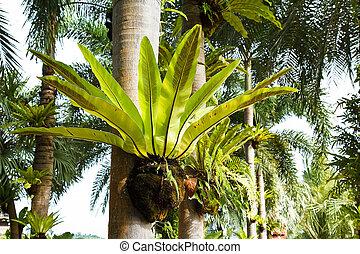 bird nest fern