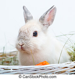 rabbit with carrot - White rabbit with carrot on the hay