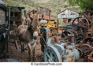 Jerome Arizona Ghost Town donkey and a lot of garbage