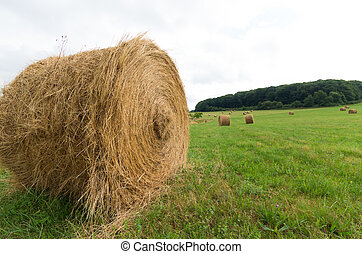 hay bales in a meadow - large hay rolls in a meadow in...