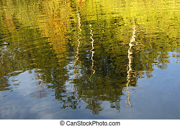 Trees Reflecting in a Lake - Haliburton, Ontario