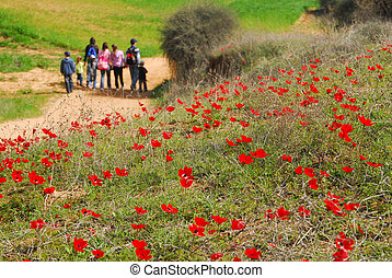 Anemone Red Flower Blossoming - NORTHERN NEGEV, ISR - FEB...