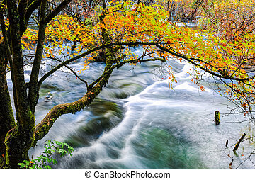 autumn tree and flowing creek at jiuzhaigou valley national...