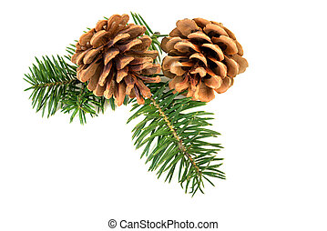 christmas pine cones - Pine cones with branch on a white...