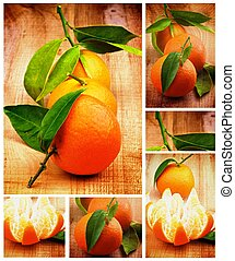 Collection of Tangerine - Collection of Fresh Ripe...