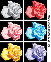 colour roses on the black background - nice colour roses on...