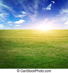 Sky and green meadow. Summer background