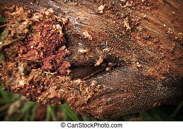 Termites eat wood