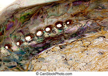 Close Up Of Inside of Abalone Shell Showing Mother-Of-Pearl...