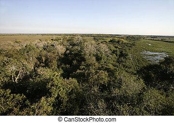 Pantanal wetlands landscape in Brazil