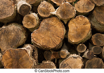 Stumps for making charcoal