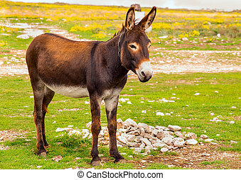 Donkey Farm Animal brown color standing on field grass The...