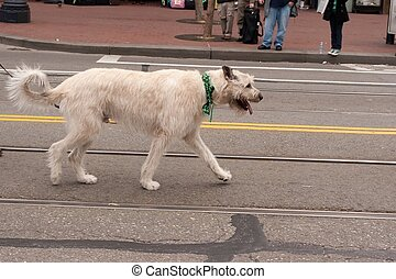 Wolfhound - Irish Wolfhound is a breed of domestic dog...