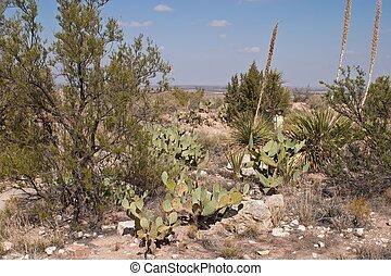 Living Desert - The Living Desert Zoo and Gardens State Park...