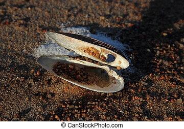Shell on beach sand.