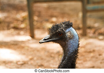 Head of an emu