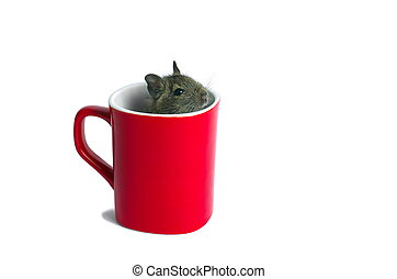 Mouse in a Mug - Macro of a mug with young degu inside...