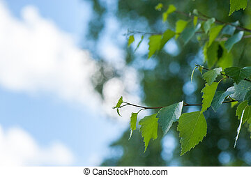 Birch leaves on background of blue sky
