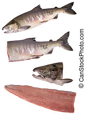 siberian salmon - Fish Siberian salmon set isolated on white...