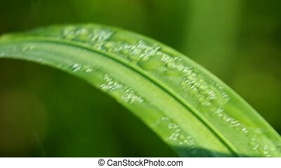 Blurred Grass Background With Water Drops. HD Shot With...