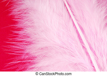 pink feather plumage texture