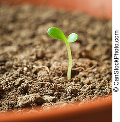 Plant sprout in a flowerpot - Young plant sprout in a brown...