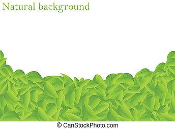 Natural background (vector illustration)