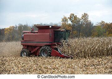 Combining corn field - A farmer combining a field of corn...