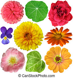 Selection of Various Flowers Isolat