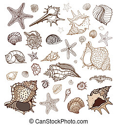 Sea shells collection. Handdrawn vector illustration