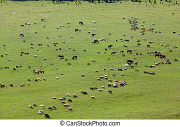 Large group of farm animals in the field - Large group of...