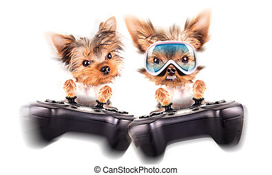 charming Puppy play on game pad on the white background