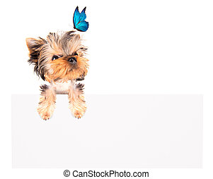 charming Puppy with blue butterfly above billboard -...