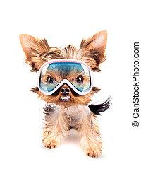 angry dog with ski mask - angry baby dog with ski mask on a...