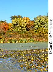 Olson Lake Northern Illinois
