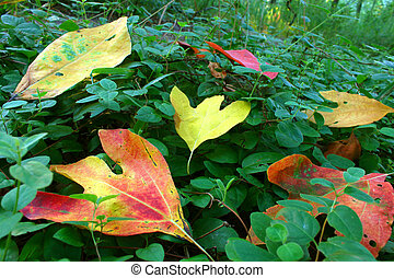 Eldon Hazlet State Park Illinois - First colorful leaves of...