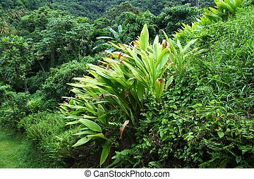 Tropical vegetation background