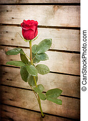 Simbol of love - red rose out of the wooden fence