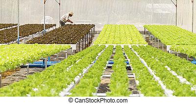 légume, organique, jardin,  hydroponic