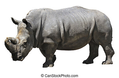 Rhinoceros - Rhino isolated over white