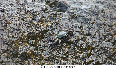 Crab - Small Crab sitting on a rock washed by the sea waves.