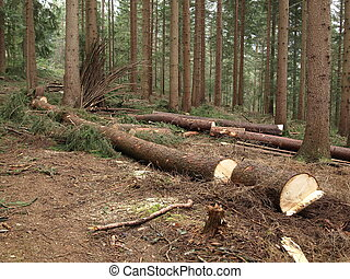 forestry, cut trees