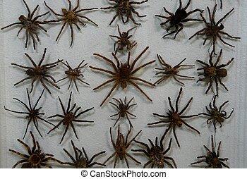 Wall of Tarantulas